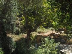 Kreta 2017- Maroulas (www.plainpixel.com) Tags: kreta messara phaistos kalamaki kamilari faistos gortyn gortis spili maroulas