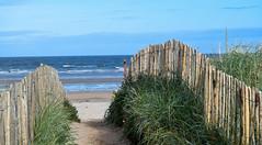 HFF 41 (Harry McGregor) Tags: fence fencedfriday hff grass sea beach sky bay sand standrews fife scotland harrymcgregor nikon d3300 17 september 2017 waves dunes palings horizon tide gulls
