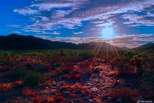 Arizona Sonoran Desert