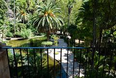 Mallorca in August (lostinavision) Tags: majorca mallorca spain summer hot august sunny green beautiful sharp contrast palma palm trees visiting travelling