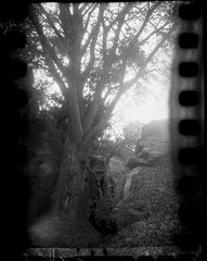 pete-P911 (pete-analogue-photos petevideos) Tags: kodak bantam 828 with tmax 400 old film self rolled for sprockets