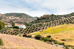 Andalusian farmstead (Keith in Exeter) Tags: mountain farmstead farmhouse olivegrove valledeabdalajís andalucía spain olive trees grass plantation dryriverbed nature landscape outdoor