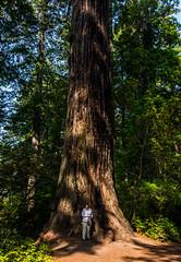 C&Coregon2017-39 (Ranbo (Randy Baumhover)) Tags: redwoodnationalpark redwoods california