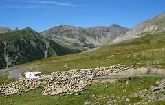 passage piéton (b.four) Tags: montagne mountain montagna pecora mouton sheep restefond hautetinée alpesmaritimes ruby5 coth5 ruby10