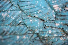 Macro Mondays - Abstract Macro Theme (sephrocker) Tags: efm m1 macro memberschoiceabstractmacrotheme blue depthoffield abstract lines dots macromondays