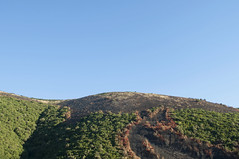Fratar, Albania (Tokil) Tags: fratar albania balkans east trip colors mountain alps nature landscape hill burning trees shqipëri shqipëria burnt nikond90