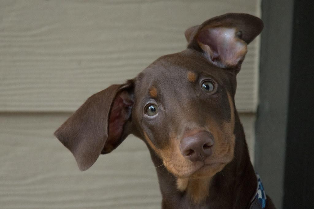 Small Dog Bark Collar Rubber Band