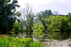 Poland (Pawelus) Tags: landscape poland polska travel lapinski lake reflection water