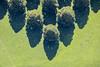 Top To Bottom (Aerial Photography) Tags: by m obb 29082017 5sr38865 baum baumreihe bäume fotoklausleidorfwwwleidorfde landschaft laubbaum linde lindenbaumreihen luftaufnahme luftbild munich münchen neuersüdfriedhof perlach reihen schatten aerial deciduoustree foliagetree landscape leaftree lime lineoftrees nature outdoor rowoftrees rows shadow tree trees bayernbavaria deutschlandgermany deu