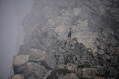 DSC_0079 (MARTIN FRED) Tags: mercantour nikon montagne lens nikon70200f28 sigma150600sport samyang1428 montains landscapephotographs nautre marmotte lac river torrent ciel faune flore chevreuil cervidés aigle vautour faons chamois papillons flowers arraigné paysage bume brouillardbrumeuxbrume chaine de panorama