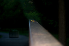 artsy fartsy leaf on a rail (avflinsch) Tags: ifttt 500px park bridge path leaf dark rail walkway