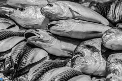 The last of us (bffpicturesworld) Tags: fish blackwhite thelastofus horror dead