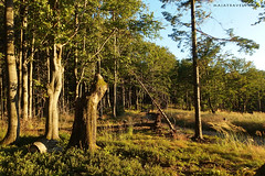 Beskid Mountains (majatravels) Tags: hiking mountains poland europe landscape trees travel forest sunset beautiful outdoor summer light green nature beskidy
