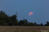 Aufgang des halbverdunkelten Vollmondes (astrofan80) Tags: astronomie mofi2017 mond mondaufgang mondfinsternis stromleitung treppendorf bäume dämmerung abendhimmel lunareclipse