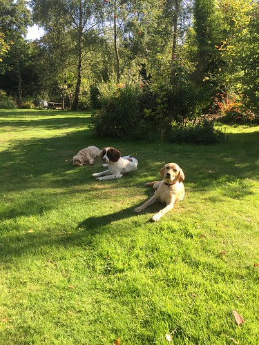 All resting in the garden after a hard day playing