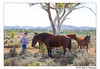 The horse whisperer (Right On Photography) Tags: horse silverton wild taming whisperer outback