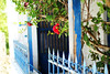 Red on blue (Katrinitsa) Tags: paros2017 paros greece greekislands architecture lefkes art artistic cyclades aegean mediterranean blue colors white nature landscape villagelife villagescape village house yard garden canon canoneosrebelt3i ef35mmf14lusm bokeh focus zoom macro detail summer amazing awesome beauty beautiful dream dreamer dreamy dreamland dreamscape magic magical travelphotography travel door doorstep flowers bloom blossom natural pots doorfront bougainvillea red joy happy happiness inspiring inspiration relaxing relax calmness calm peace sunlight sunshine daylight light shadows iviscus excellent ef24mmf14lusm fence