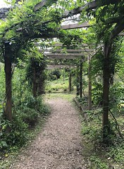 Down the garden path (KelJB) Tags: beams grass environment green outdoors natural nature beautiful garden outside plants woodenbeams wood vines trees trellis track path trail gardenpath