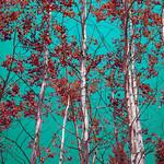 Funky Sky & Aspens (Grand Teton National Park) thumbnail