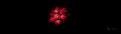 Red Flower Burst (Donald.Gallagher) Tags: fireworks greenwood horizontal longwoodgardens northamerica pa pennsylvania public summer typecolor typelightroom typemanualfocus typeportrait typewideangle usa