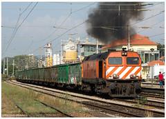 Gaia 26-08-16 (P.Soares) Tags: comboio trains train tren transportesxxi terminalintermodal portugalferroviário lusocarris diesel cpcarga laranja 1960