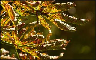 09.09.17  Autumn..