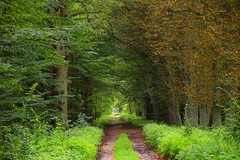 summer moods (JoannaRB2009) Tags: dolinabaryczy dolnyśląsk lowersilesia path road nature forest green tree trees polska poland summer mood woods