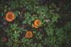 Mushrooms hiding (~ Maria ~) Tags: tyresta forest autumn nature nationalpark sweden september 2017 mariakallinphotography nikond800 nikon2470mm