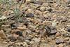 "8H2_23590330 (kofatan (SS Tan) Tan Seow Shee) Tags: ""hualapai"" ""hwal bay nyu wa"" ""hoover dam"" zion ""grand canyon"" ""great salt lake"" usa ""guoano point"" montana ""kolob fillmore utah arizona titon"" ""yellow stone"" kofatan"