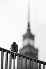 Warszawa (Marcin Krawczyk) Tags: warszawa marcinkrawczyk