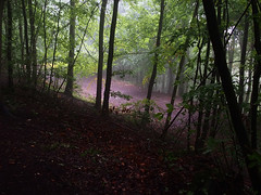 the track below (mark.griffin52) Tags: olympusem5 england buckinghamshire wendoverwoods countryside beechtrees trees autumn mist landscape forest woodland