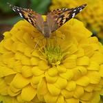 Garden paintbox thumbnail