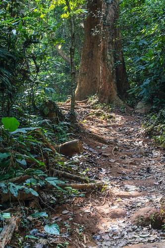 ramkhamhaeng national park - thailande 16