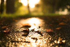 Fall (--Conrad-N--) Tags: fall leaves autumn a7rm2 atardecer za zeiss forest flickr low perspective reflection rain