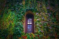 Vines View (West Leigh) Tags: california napa travel explore experience dream discover lush green grow window nature building vines view naturalbeauty peaceful