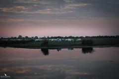 Sunrise in the Camargue (pbmultimedia5) Tags: regional nature park camargue france white horses wildlife sunrise delta rhone river reflections wetlands pbmultimedia