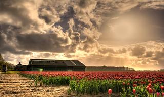 Dutch Sunlight.
