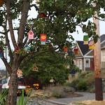 Dense tree-housing at this neighborhood traffic circle thumbnail