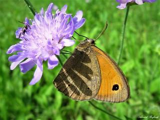 Butterfly 1416
