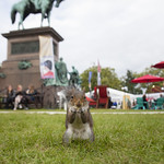 The Book Festival isn't just for humans...