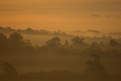 The Dawning of a New Error (steve.geliot) Tags: mist dawn tree south downs august mellow