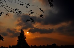away... (Ruby Ferreira ®) Tags: sunset pôrdosol branches brasil brazil trees buildings city prédios silhuetas silhouettes cidade