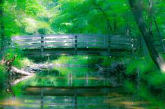 The bridge at sunrise.... (tomk630) Tags: virginia sunrise bridge green foliage morning stream reflection nature trees summer