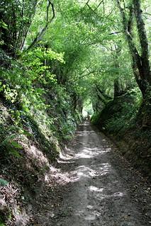A Sunday Walk # 11 Hollow Road