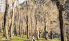 DSC_0061 (Visual Dumpster) Tags: paysage nature natural trees cajondelmaipo chile chileanart mountains snow
