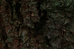 IMG_1083 (bia93snow) Tags: skin pelle albero tree nature