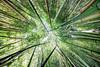 Bambous !!! (Bruno MATHIOT) Tags: bambou bamboo plante plant green vert mono up ultragrandangle sigma 1020mm canon 760d jardin garden outdoor france french hdr photomatix
