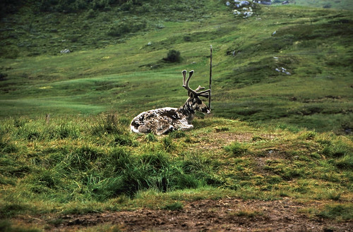 "Norwegen 1998 (141) Vikafjell • <a style=""font-size:0.8em;"" href=""http://www.flickr.com/photos/69570948@N04/36311745964/"" target=""_blank"">View on Flickr</a>"