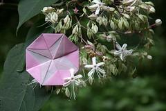 Morning Glory and Clerodendrum trichotomum (Ichigo Miyama) Tags: アサガオとクサギ morningglory clerodendrumtrichotomum origami おりがみ クサギ 折り紙 paper アサガオ flower おりがみ写真 origamiphotoorigami 花 origamiphoto
