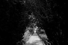 Leading to Kyoto (lorenzoviolone) Tags: arc arch bw blackwhite blackandwhite finepix fujix100s fujifilm fujifilmx100s garden monochrome vsco vscofilm x100s hollandpark leadinglines mirrorless park path sidewalk stranger trees london england unitedkingdom